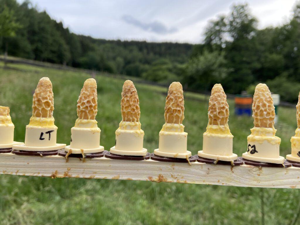 angepflegte Näpfchen im Zuchtrahmen